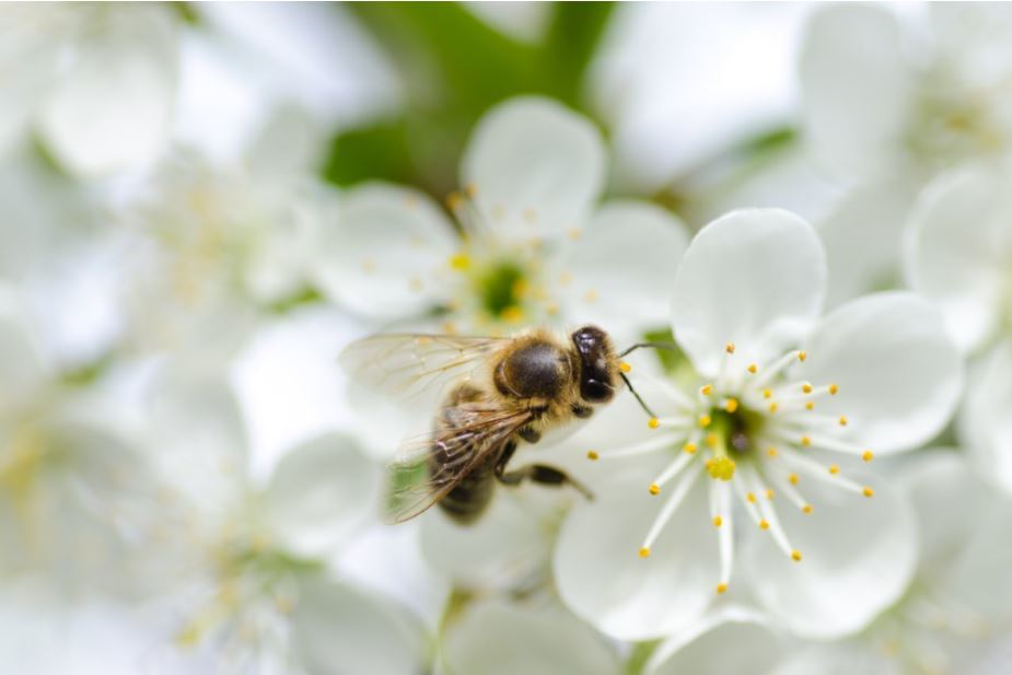 Take action: Protect the bees in Maine